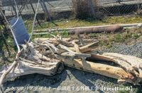 流木の特大入荷‼︎【受付開始】